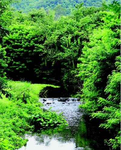 คนพึ่งป่า ป่าพึ่งคน : เหตุผลในการอนุรักษ์